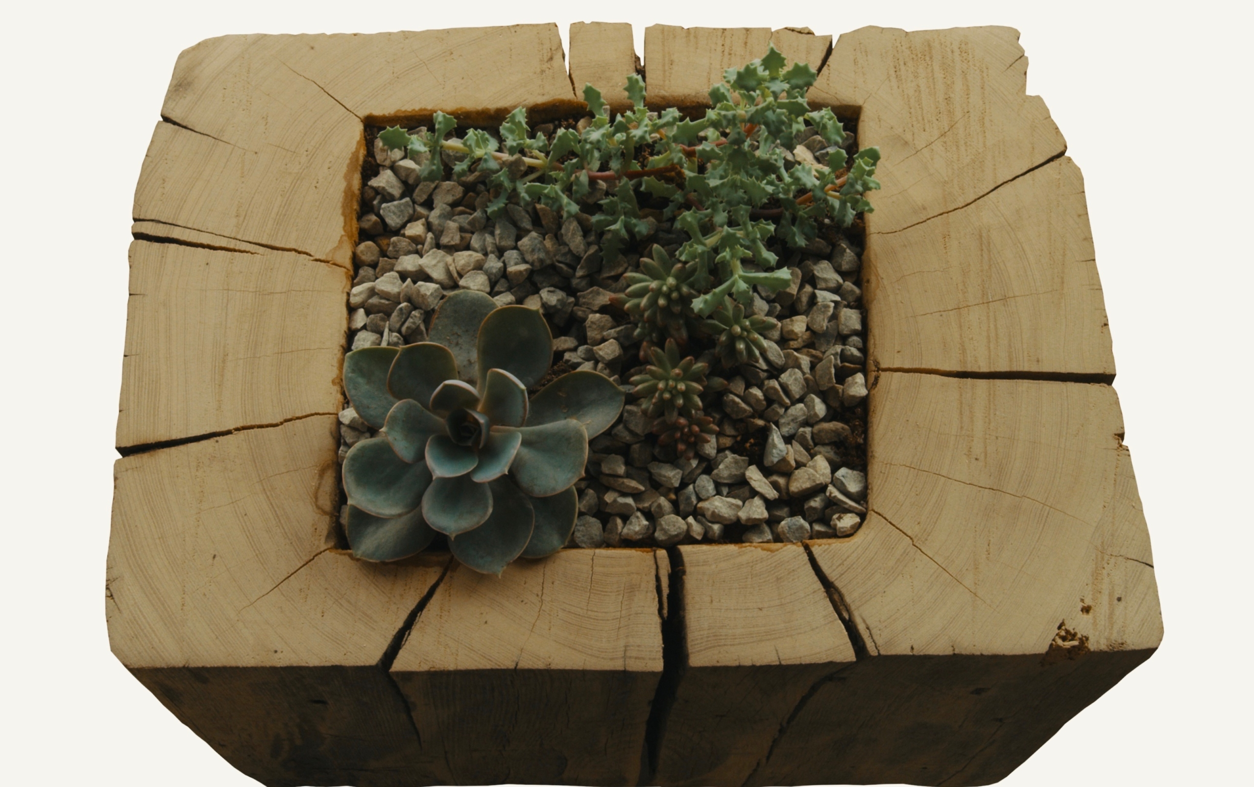 Reclaimed Wood & Succulents